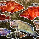 魚抜き集合