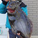 巨大ヒラメまで登場!!写真は、86cm 7.16kg ヒットルアー  アスリートバイブ 28g